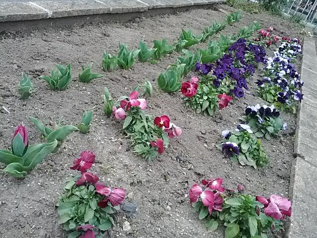花壇でした!